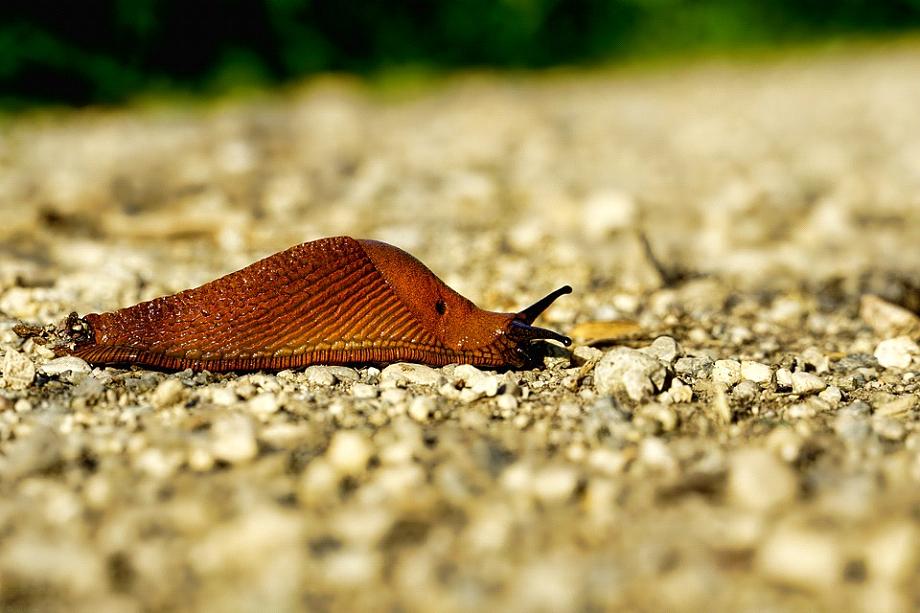 6 gode råd til, hvordan du bekæmper havens skadedyr
