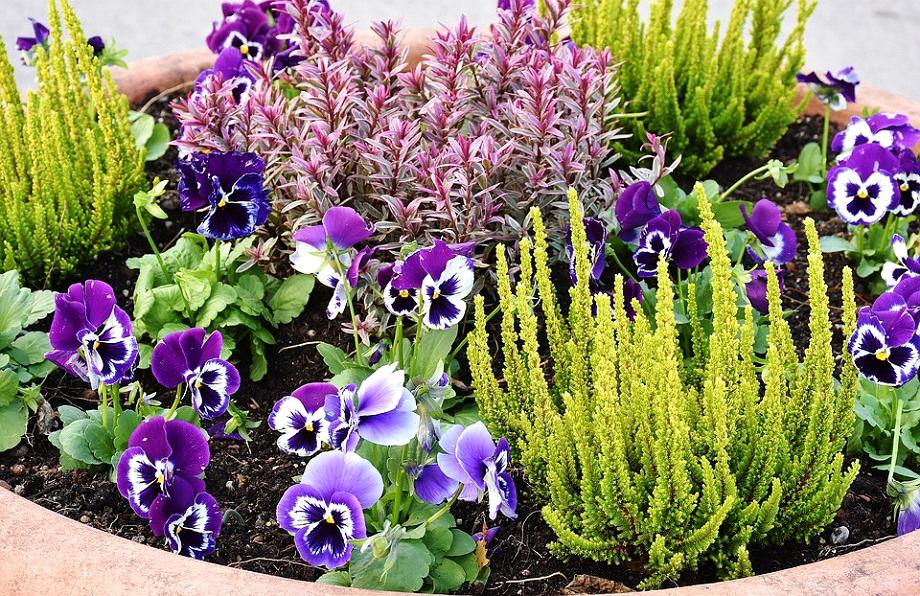 5 lette tips til hvordan du vedligeholder haven om sommeren